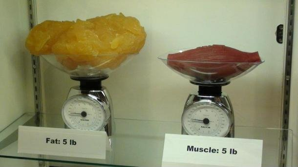 Fat vs Muscle