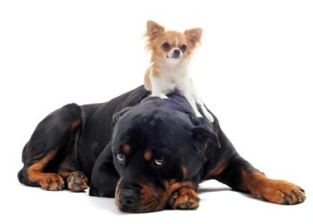 big_dog_small_dog_re